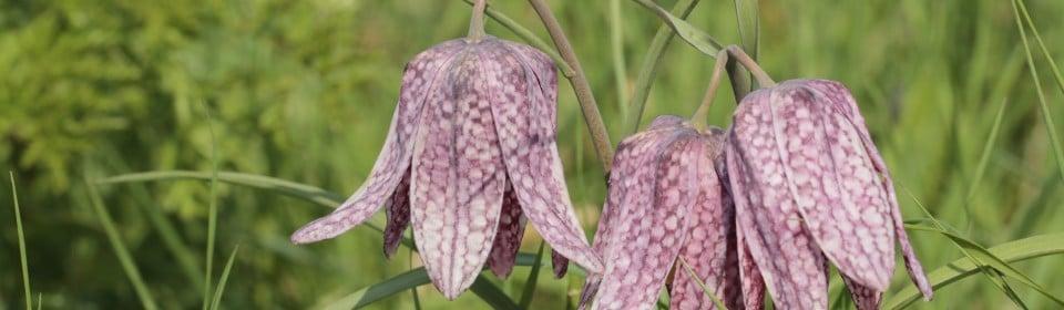 Flora onderzoek