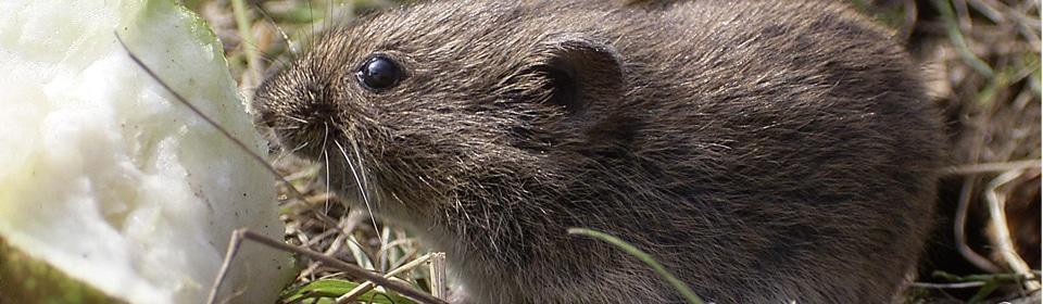 Muizenonderzoek