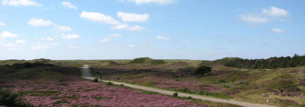 Duinen Texel