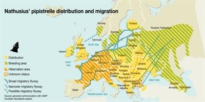 Vleermuisonderzoek: verspreiding en migratie ruige dwergvleermuis