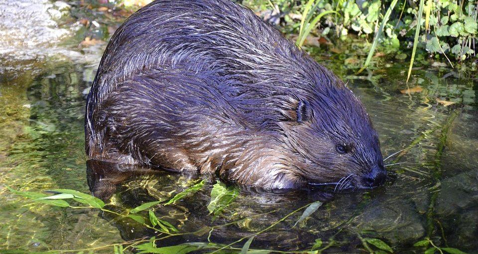 lijst beschermde dieren nieuwe Wet natuurbescherming