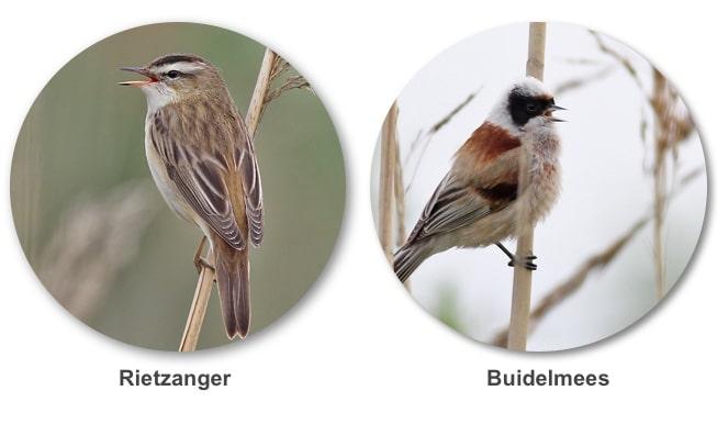 Vogelbroedonderzoek Ecoresult